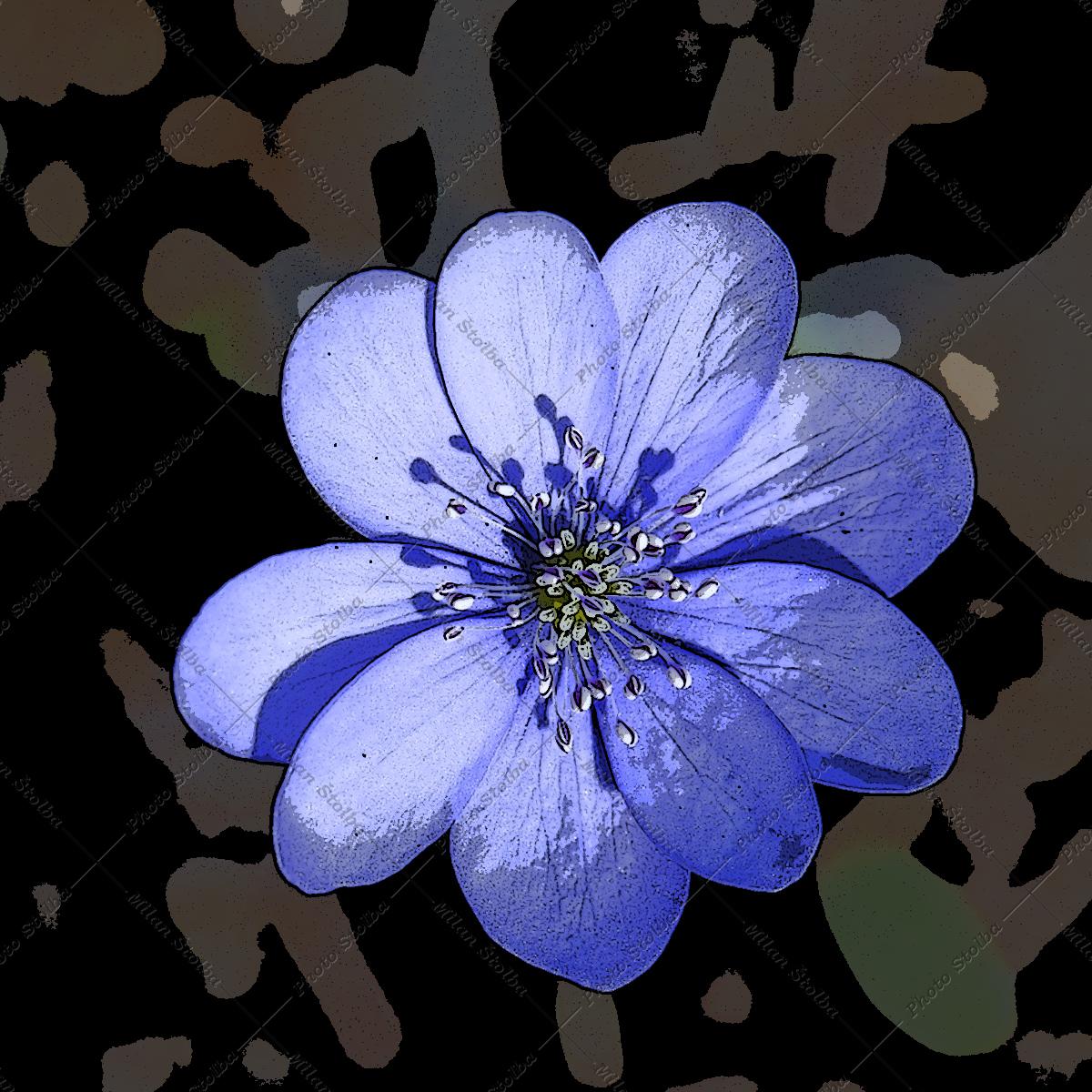 Snové květiny